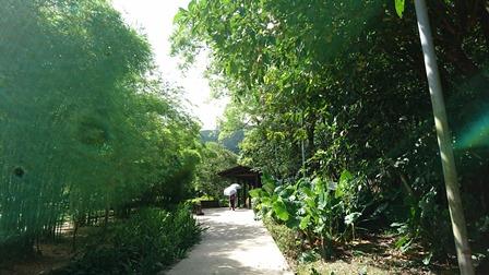 森林温泉.jpg